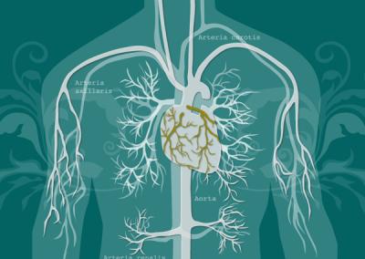 Herzkreislauf